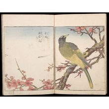 北尾重政: Sketches of Birds and Flowers (Hanatori sharei zu), Vol. 3 - ハーバード大学