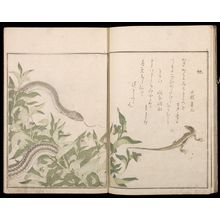 喜多川歌麿: Picture Book: Selected Insects (Ehon mushi erabi), 2nd of 2 Volumes, Mid Edo period, 1788 - ハーバード大学