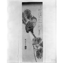 Utagawa Hiroshige: Owl on a Pine Branch by Moonlight, Late Edo period, circa early 1830s - Harvard Art Museum