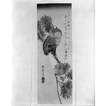 歌川広重: Owl on a Pine Branch by Moonlight, Late Edo period, circa early 1830s - ハーバード大学