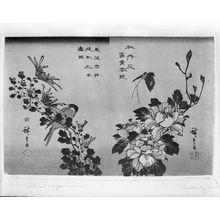 Utagawa Hiroshige: BIRD AND CHRYSANTHEMUMS - Harvard Art Museum