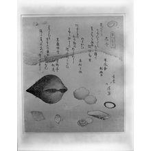 Totoya Hokkei: Flower Shells (Hanagai), Ark Shells (Akagai) and Squirting Shells (Shiofukigai), from the series A Set of Shells (Kaizukushi), Edo period, 1821 - Harvard Art Museum