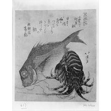 Totoya Hokkei: Tai Fish (Sea Bream) and Crawfish Representing the Yanagiyadai Restaurant, Odaharacho, from the series Noted Products of Edo (Edo Meibutsu), Edo period, circa early 19th century - Harvard Art Museum
