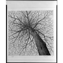 Tanaka Ryôhei: Winter Tree, Shôwa period, dated 1967 - ハーバード大学