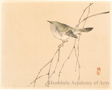 Kono Bairei: Bird on a Branch (descriptive title) - Honolulu Museum of Art