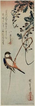 Utagawa Hiroshige: A Bird Clinging to a Tendril of Wisteria - Honolulu Museum of Art