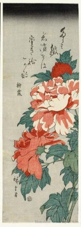 Utagawa Hiroshige: Red Peonies - Honolulu Museum of Art