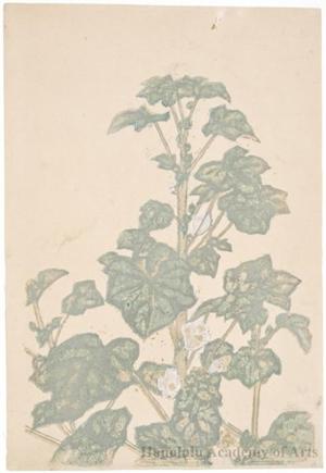 Onchi Koshiro: Flower - Honolulu Museum of Art