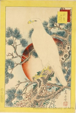 Sügakudö: White Hawk on Pine Tree - Honolulu Museum of Art