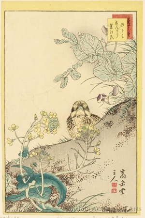 Sügakudö: Thrush, Pea Flowers and Rape Blossoms - ホノルル美術館