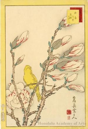 Sügakudö: Canary on Magnolia Branch - ホノルル美術館