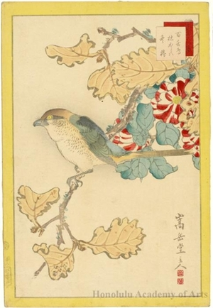 Sügakudö: Butcherbird, Oak Tree and Camellia - ホノルル美術館