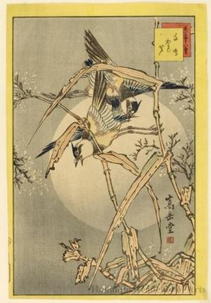 Sügakudö: Plovers and Reeds - ホノルル美術館