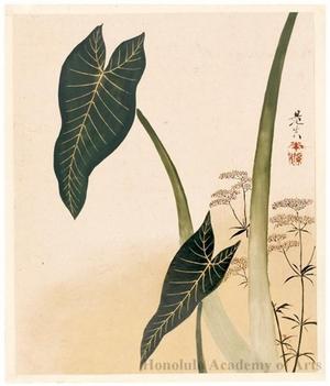 柴田是眞: Arum and Flowering Weed (painting) - ホノルル美術館