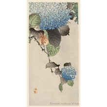 Kono Bairei: Bird on Hydrangea branch. - Honolulu Museum of Art