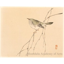 Kono Bairei: Bird on a Branch (descriptive title) - Honolulu Museum of Art