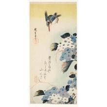 歌川広重: Hydrangeas and Kingfisher - ホノルル美術館