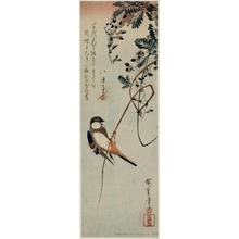 Utagawa Hiroshige: A Bird Clinging to a Tendril of Wisteria - Honolulu Museum of Art