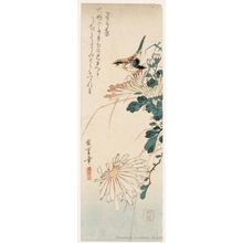 歌川広重: A Little Bird Amidst Chrysanthemum - ホノルル美術館