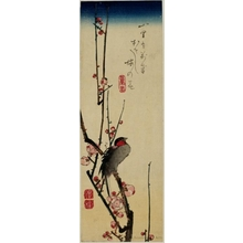 Utagawa Hiroshige: Java Sparrow Perched on Plum Blossom Branch - Honolulu Museum of Art