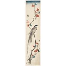 歌川広重: Magpie and Maple Leaves - ホノルル美術館