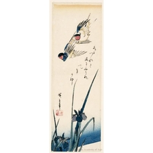 Utagawa Hiroshige: Swallows and Iris - Honolulu Museum of Art
