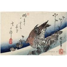 Utagawa Hiroshige: A Great Knot Sitting among Water Grass - Honolulu Museum of Art
