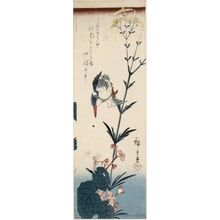 歌川広重: Kingfisher and Blossoms (Descriptive Title) - ホノルル美術館