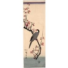 Utagawa Hiroshige: Zebra Finch on Cherry Blossom Branch (Descriptive Title) - Honolulu Museum of Art