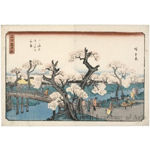 Utagawa Hiroshige: Cherry Trees in Full Bloom on the Koganei Embankment - Honolulu Museum of Art