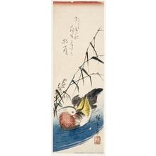 Utagawa Hiroshige: Mandarin Ducks and Grasses (Descriptive Title) - Honolulu Museum of Art