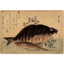 Utagawa Hiroshige: Striped Snapper, Rock Trout & Nandin - Honolulu Museum of Art