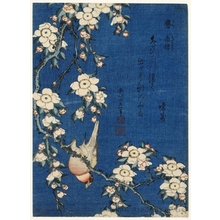 Katsushika Hokusai: Weeping Cherry and Bullfinch - Honolulu Museum of Art