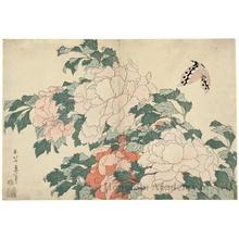 葛飾北斎: Peonies and Butterfly - ホノルル美術館