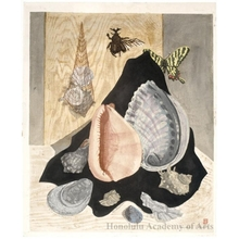 Sekino Junichirö: Shells and Butterflies - ホノルル美術館