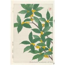 Kawarazaki Shödö: Fragrant Olive - ホノルル美術館