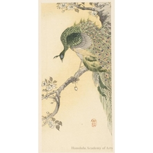 Shoson Ohara: Peacock in a cherry tree - ホノルル美術館