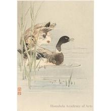 Itö Sözan: Two Geese - ホノルル美術館