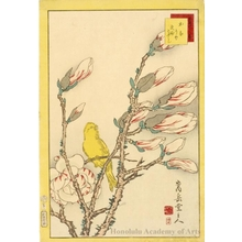 Sügakudö: Canary on Magnolia Branch - Honolulu Museum of Art