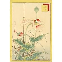 Sügakudö: Sparrows and Poppies - ホノルル美術館
