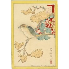 Sügakudö: Butcherbird, Oak Tree and Camellia - Honolulu Museum of Art