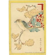 Sügakudö: Butcherbird, Oak Tree and Camellia - ホノルル美術館