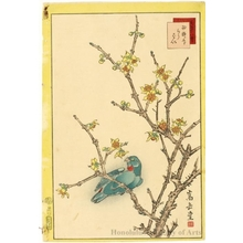 Sügakudö: Parrot on Plum Tree - ホノルル美術館