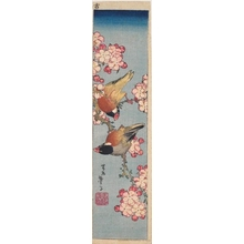 Katsushika Taito II: Birds on a Cherry Branch - ホノルル美術館