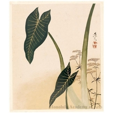 Shibata Zeshin: Arum and Flowering Weed (painting) - Honolulu Museum of Art