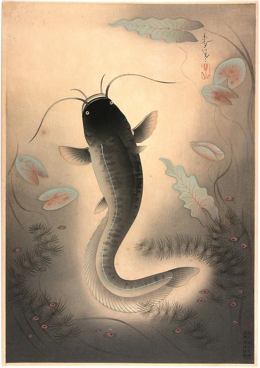 http://data.ukiyo-e.org/jaodb/images/Bakufu_Ohno-Familiar_Fishes_of_Nippon-Catfish_Namazu-00035945-040328-F12.jpg