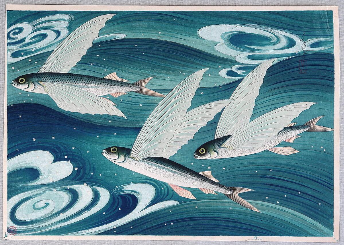 Bakufu ohno flying fish tobiuo japanese art for Flying fish images