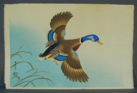Asada Benji: Unknown, Duck in flight - Japanese Art Open Database