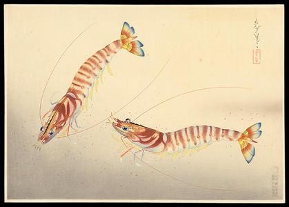 大野麦風: Kuruma-Ebi- shrimps - Japanese Art Open Database