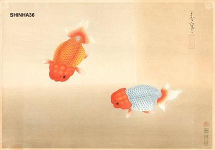 Bakufu Ohno: Ranchu Goldfish — ランチュウ - Japanese Art Open Database